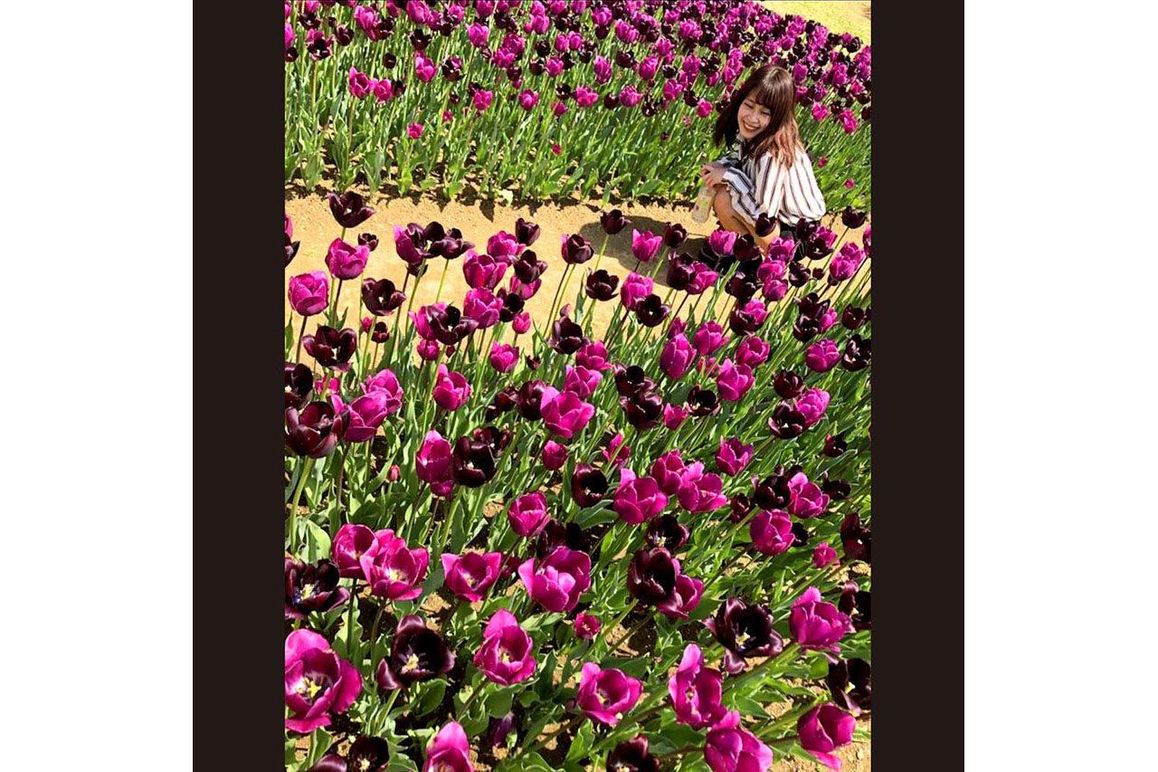 国営越後丘陵公園のチューリップ!深い紫色が好みです。